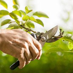 Arboriculteur Arboricultrice